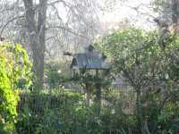 Local Birdlife